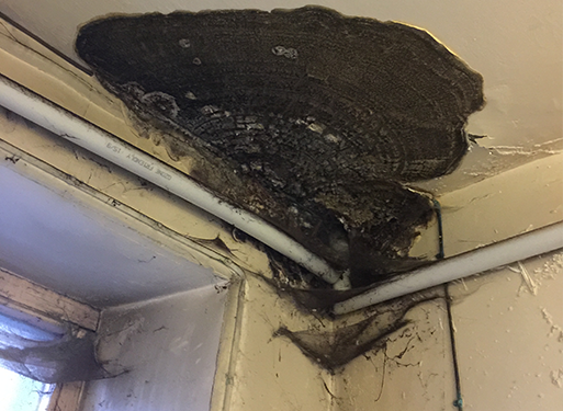 Wet and Dry Rot on ceiling