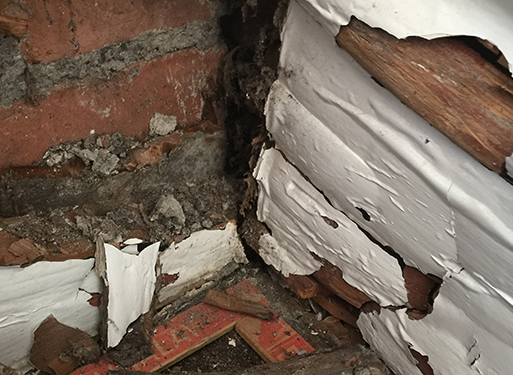 Wet and Dry Rot wood